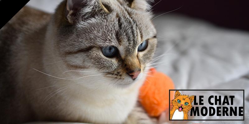 Apprendre à son chat à ramener la balle !