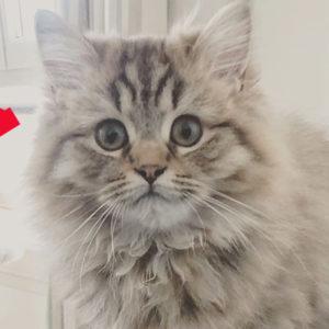 Les prénoms pour chats commençant par R (2020)