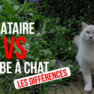 Herbe à chats et herbe aux chats : Des différences importantes !