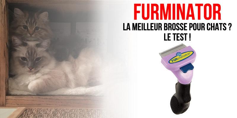 Brosse Furminator pour chat : Le test complet !