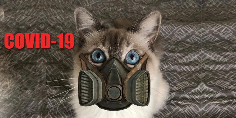 Coronavirus ou Covid-19 : Quel risque pour les chats ?