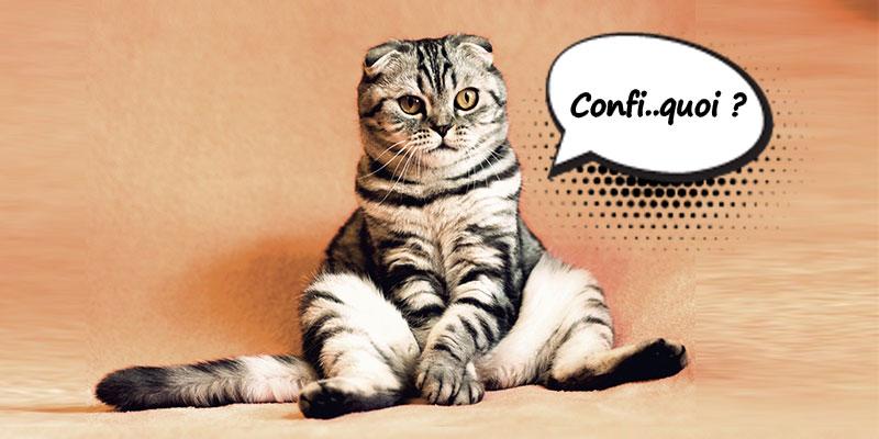 COVID-19 : 7 Astuces pour vivre avec son chat durant le confinement