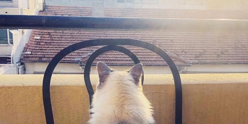 Laissez le sortir ou allez prendre l'air avec lui. Profitez de vos sorties sur la terrasse pour sortir avec votre chat !