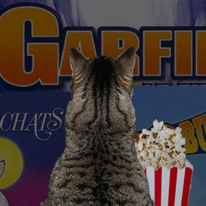 10 films à voir avec votre chat !