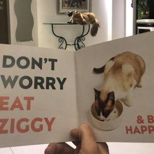 [TEST] Notre avis sur la pâtée pour chats Ziggy