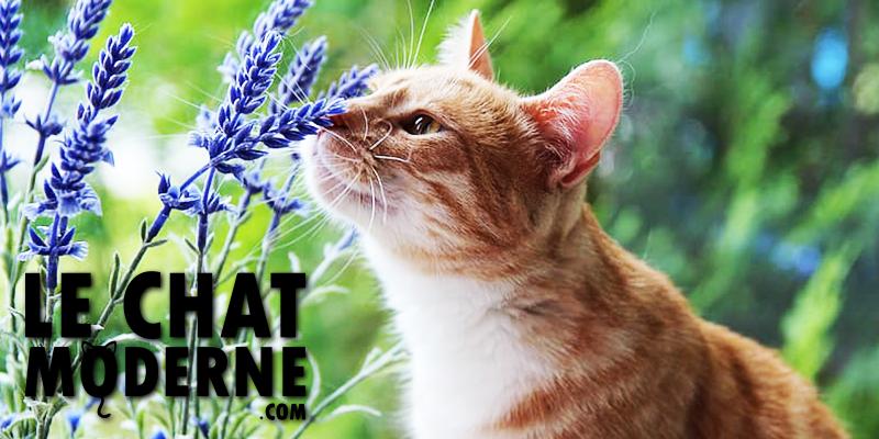 [TOP 10] Les dix meilleures plantes pour chats !