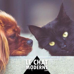 [TUTO] Faire cohabiter un chien et un chat ?