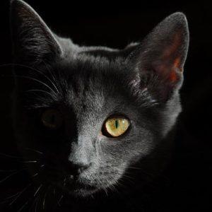 La couleur de votre chat influe-t-elle sur son caractère ?