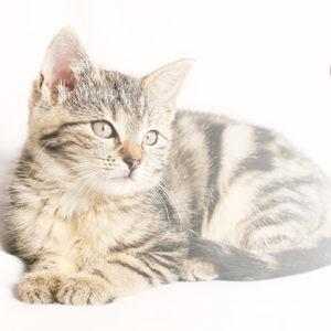 Comment enlever une tique à son chat ?