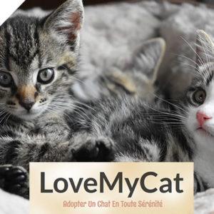 LoveMyCat: Le programme qui rend les chats heureux