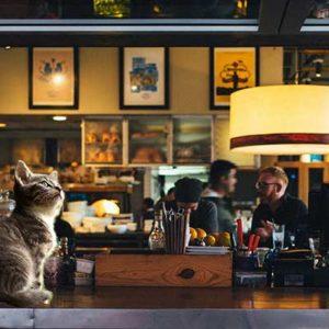 [TOP 15] Les meilleurs bars à chats en France !